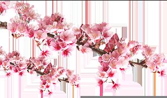 flower_left